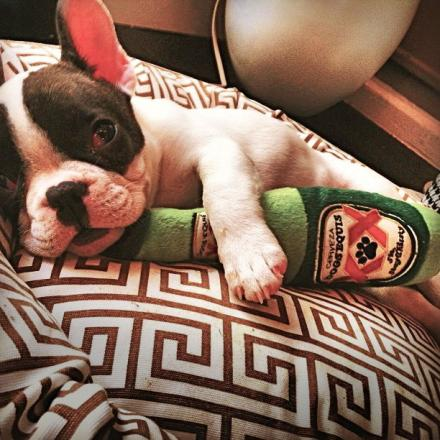 dogs-equis-beer-bottle-dog-toy-thumb