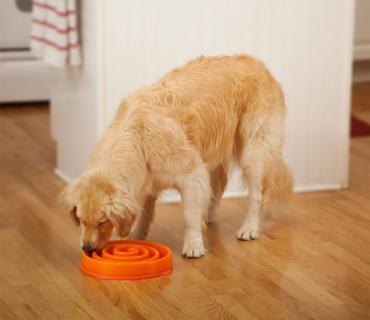 slo-bowl-dog-food-bowl-for-slow-feeding-3