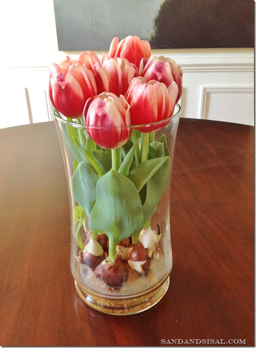 Forcing Tulips in Water[4]