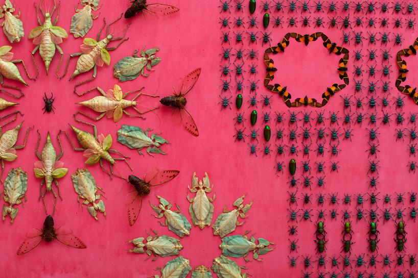 umenie z hmyzu